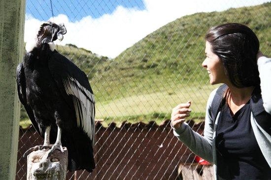 Santuario Animal de Cochahuasi: Santuario Animal