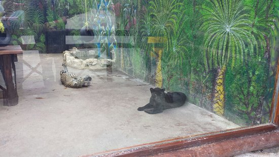 Bel Air Collection Xpu Ha Riviera Maya: Animal park