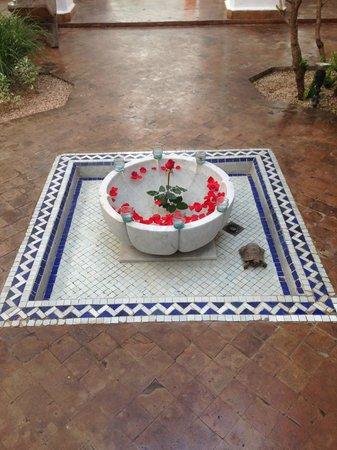 Riad l'Orangeraie : Valentino the tortoise brings good baraka (luck)