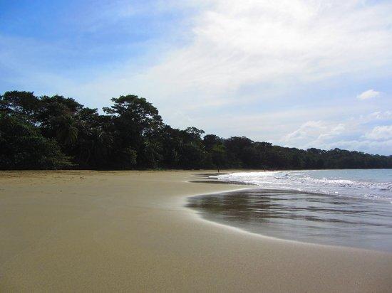 Pachamama Jungle River Lodge: Punta Uva, about 200ms (2 min walk) South of Pachamama