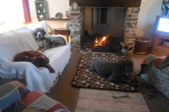 Kings Nympton, UK: our dogs enjoying the log burner we provided our own throws for the sofa