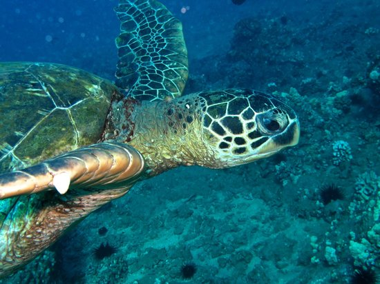 B&B Scuba : Swimming with the turtles