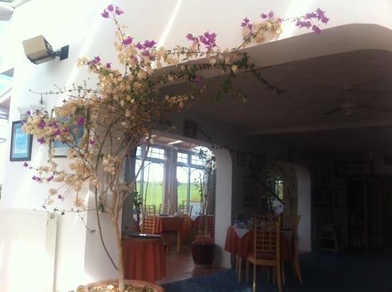 The Windward Hotel: Lovely Bougainvillea  !