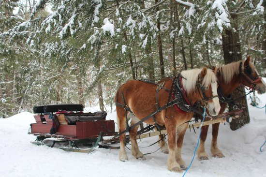 High View Farm: Our sleigh.