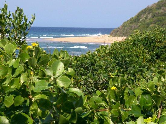 Thonga Beach Lodge: Strand und Wildnis