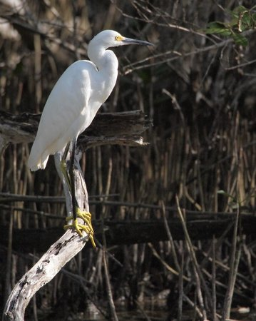 Seascape Inn, Andros: Great Egret