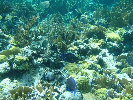Seascape Inn, Andros : Barrier reef