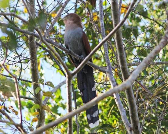 Mexico Kan Tours - Day Tours: Squirrel Cuckoo