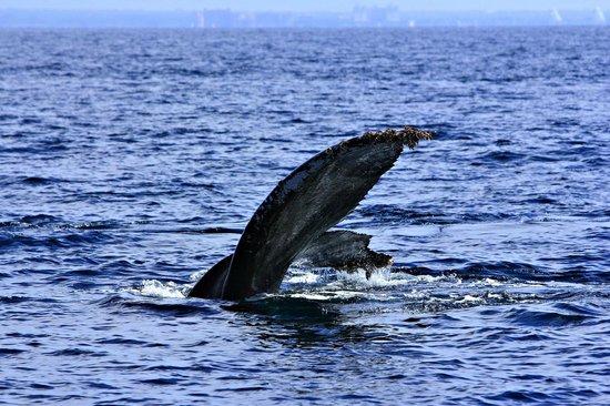 Pegaso Chartering: big fin