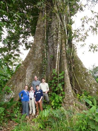 Itamandi EcoLodge : the Kapok tree is huge!