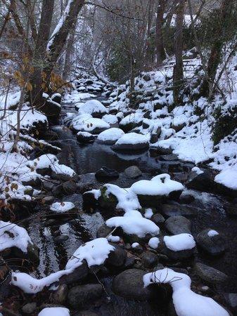 Parque Lithia: Lithia park creek