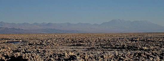 Alto Atacama Desert Lodge & Spa: Bird watching excursion