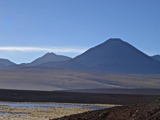 Alto Atacama Desert Lodge & Spa: Wetland for bird watching