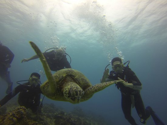 Oahu Diving: Team photo with turtle