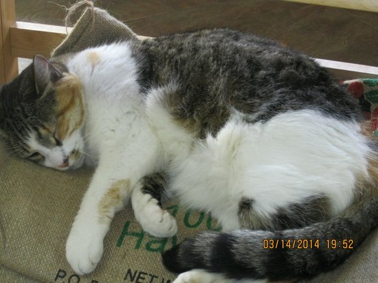 Hilo Coffee Mill: friendly and adorable 3rd shift worker resting up for night shift in store