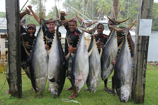 Freedive Fiji Charters - Day Trips : Yellowfin Tuna