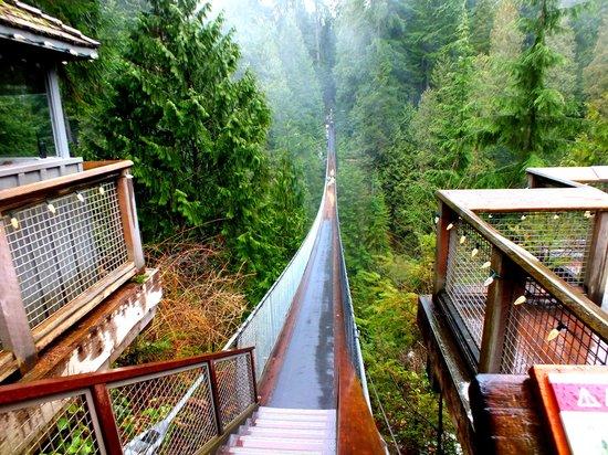 Parque y Puente colgante de Capilano: Suspension bridge
