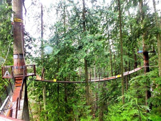 Parque y Puente colgante de Capilano: Treetop adventure