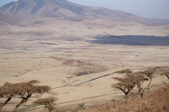 Ngorongoro Serena Safari Lodge: from the room