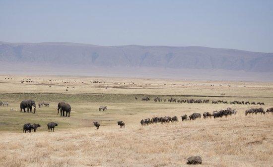 Ngorongoro Serena Safari Lodge: animals in the crater