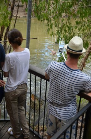 Hartley's Crocodile Adventures : Audience standing in front of croc show area, without zoom, all you see in your pics are people!