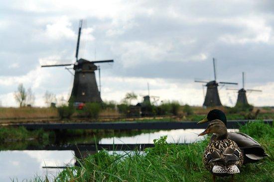 Réseau de moulins de Kinderdijk-Elshout : семья , Ветряные мельницы в районе Киндердейк-Элсхаут