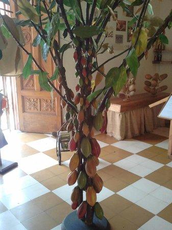ChocoMuseo : Arbol de cacao (a escala)