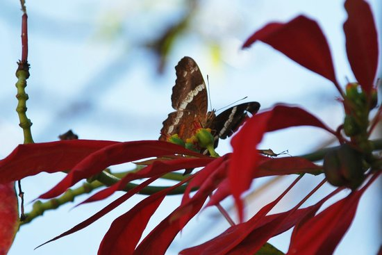 Dreams Huatulco Resort & Spa : Butterfuly at the Coffee Plantation Tour
