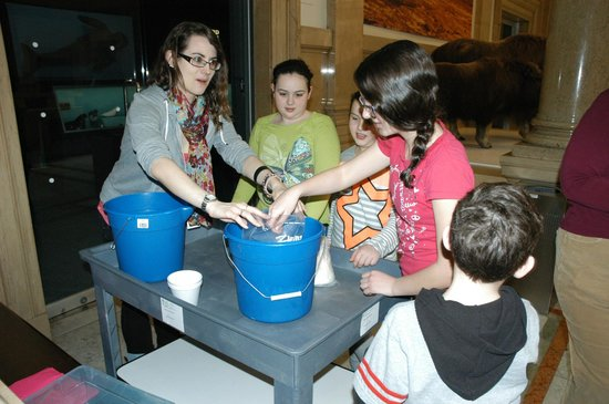 Carnegie Museum of Natural History : Interactive Staff and kids having fun