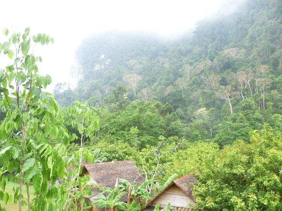 The Cliff & River Jungle Resort: Вокруг зелень