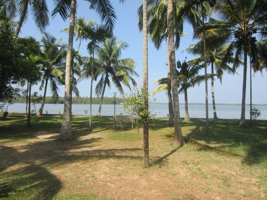 Gramam Homestay: view from bungalow