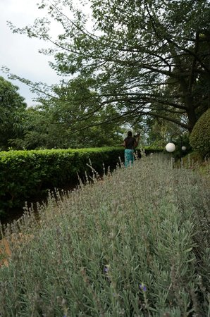 Onsea House Country Inn & Guest Cottage: Lavender in the gardens