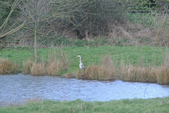 Milton Brook Estate: Heron by lake