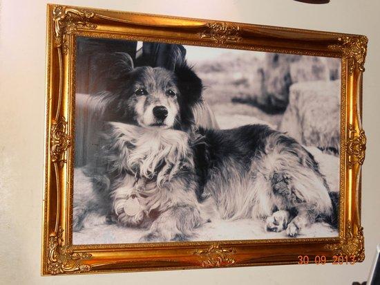 Shila - Sharon Cohen's Kitchen & Bar: Ресторан назван именем именно этой собаки