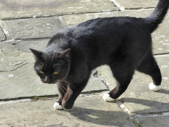Danesfield House Hotel And Spa: A friendly cat we saw in the grounds