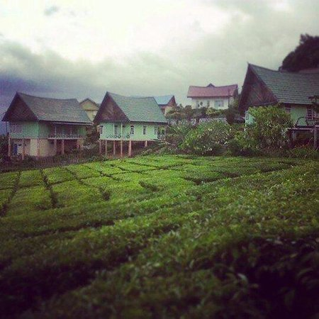 Pagar Alam, Indonesien: We can rent that house from tea company... and we can wake up tommorow with fresh air and beauti