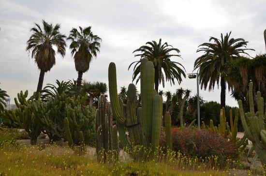 Parc de Montjuic : Долина кактусов