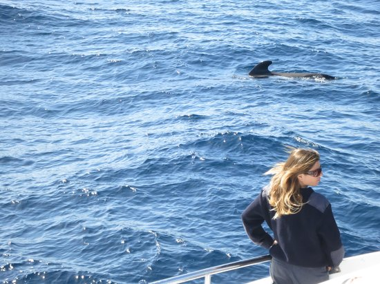 Lady Shelley: The Captain and the whale