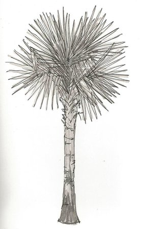 Trident, Agra : Drawing of a palm tree from the terrace