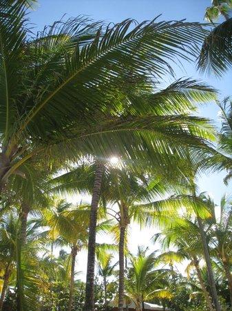 Iberostar Bavaro Suites: un coucher de soleil à travers les cocotiers