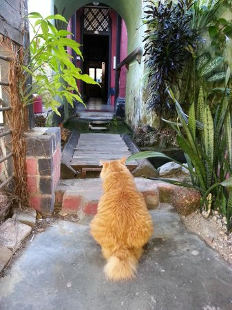 Emily Travellers' Home: Cat