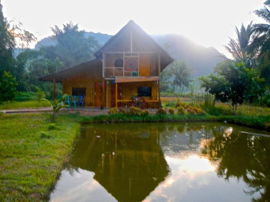 Abdi Homestay, Ikbal & Noni : Abdi Homestay view across the Padi field and Fishing Pool