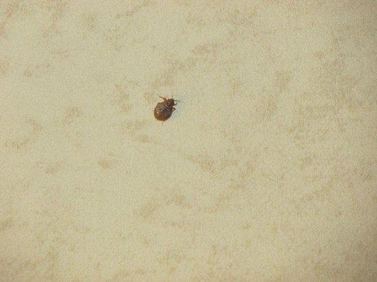 Days Inn Goldsboro: Bed Bugs!