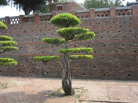 Anping Fort (Anping gubao): arbres taillés