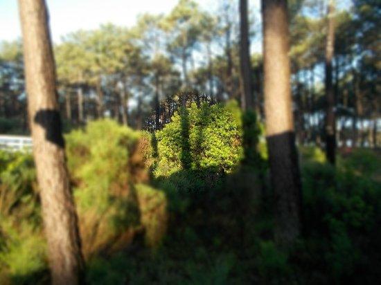 La Jenny : der Blick in die Kieferwälder