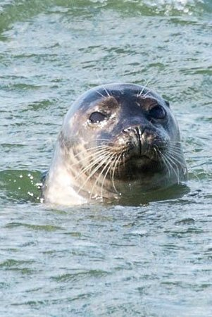 Freeport Water Taxi & Tours: Photo taken by Mike Fauci on one of our Seal Watching Tours