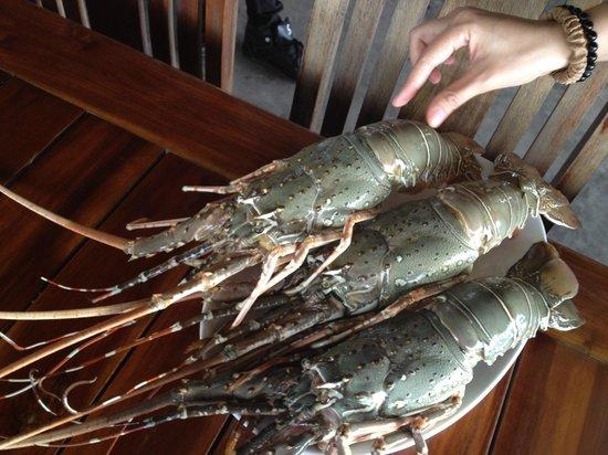 Sabienglae Restaurant: lobster