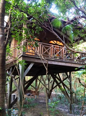 Hamanasi Adventure and Dive Resort: Our treehouse!