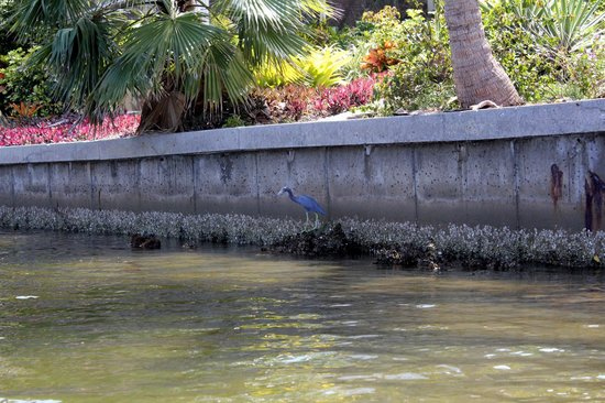 Pine Island Paradise Paddling Day Tours: This was a beautiful bird seen along the sea wall