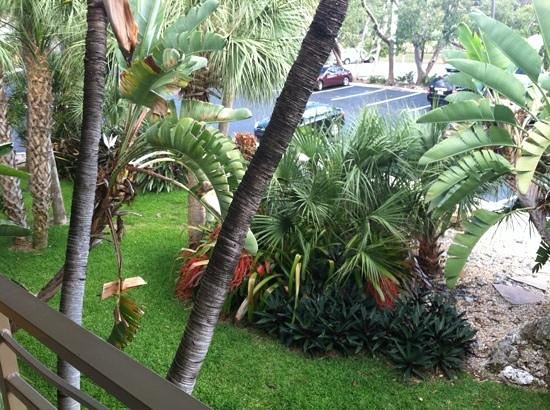 Hampton Inn Key Largo: view from room toward parking lot